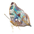 Tropical blue and black - butterfly Royalty Free Stock Photo