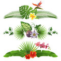 Tropical borders decorative from leaves and flowers Stock Image