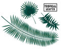 Tropical branches, leaves on white background, palm tree leaves isolated Royalty Free Stock Photo