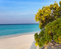 Tropical bush on the bank of the azure sea maldives Royalty Free Stock Image