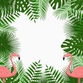 Tropical card, poster or banner template with jungle palm tree leaves and pink flamingo birds. Exotic background. Vector. Royalty Free Stock Photo