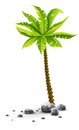Tropical coconut palm tree with green leaves single plant in stones nature detail vector illustration of coco on white Stock Photo