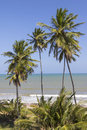Tropical coconut palms trees on the beach facing the sea during the summer Royalty Free Stock Photo