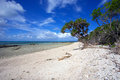 Tropical coral beach a in australia on lady musgrave island Royalty Free Stock Photography
