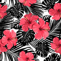 Tropical coral flowers and leaves on black and white background.