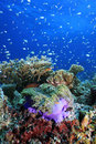Tropical coral reef Stock Photos
