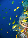 Tropical coral reef fish Royalty Free Stock Photography