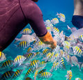 Tropical coral reef man feeds the tropical fish under water ocean warning authentic shooting underwater in challenging conditions Royalty Free Stock Images