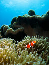 Tropical Coral Reef Scene Stock Images