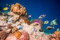 Tropical coral reef with a variety of hard and soft corals and fish Royalty Free Stock Photos