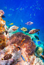 Tropical coral reef with a variety of hard and soft corals and fish Stock Images