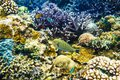 Tropical corals and bright fish on reef in Indian ocean. Royalty Free Stock Photo
