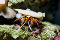 Tropical crab in aquarium Royalty Free Stock Photography