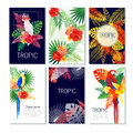 Tropical Design Cards Collection