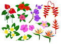 Tropical exotic flowers set Royalty Free Stock Photo