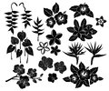 Tropical exotic flowers silhouette set Royalty Free Stock Photo