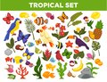 Tropical and exotic fruits, birds, fishes and plants vector set