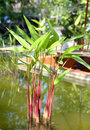 Tropical exotic heliconia plant.