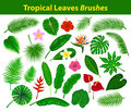 Tropical Exotic Leaves Collection as Brushes with flowers Royalty Free Stock Photo