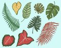 Tropical or exotic leaves, leaf of different vintage looking plants. monstera and fern, palm with banana botany set