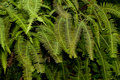 Tropical fern leaves Stock Photos