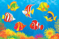 Tropical fish above a coral reef Stock Image