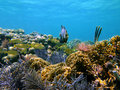 Tropical fish in caribbean corals Stock Photography