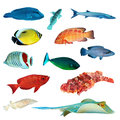 Tropical fish collection Royalty Free Stock Photo