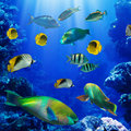 Tropical fish in coral reef Stock Photos