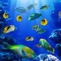 Tropický v korál útes