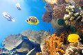 Tropical fish at coral reef in sea water Stock Photos