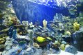 Tropical fish on a coral reef various Stock Photo