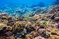 Tropical fish and corals on reef in Indian ocean. Royalty Free Stock Photo