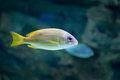 Tropical fish at moscow oceanarium amazing russia Royalty Free Stock Images