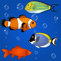 Tropical fish set vector of on white background Royalty Free Stock Photo