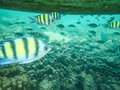 Tropical fish under a boat colored swimming over coral reef Royalty Free Stock Photos