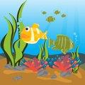 Tropical fishes seaborne Stock Photos