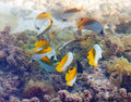 Tropical fishes .Underwater landscape Stock Image