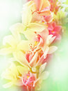 Tropical floral background with  orchids Stock Images