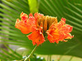 Tropical flower orange one stock on the green background was captured in maldives Royalty Free Stock Photo