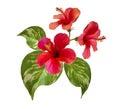 Tropical Flowers Arrangement.