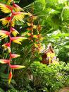 Tropical flowers bird of paradise thailand Royalty Free Stock Photos