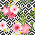 Tropical Flowers and Leaves Geometric Background Royalty Free Stock Photo