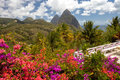 Tropical flowers, Piton mountains on Caribbean island of St Lucia Royalty Free Stock Photo