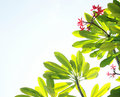 Tropical flowers and sky background Stock Photo