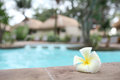 Tropical flowers swimming pool with Stock Photo