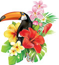 Tropical flowers and toucan butterfly Royalty Free Stock Images