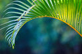 Tropical foliage Royalty Free Stock Photos