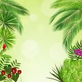 Tropical foliage. Floral design background Royalty Free Stock Photo