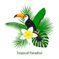 Tropical foliage leaf flower arrangement with toco toucan Royalty Free Stock Photo